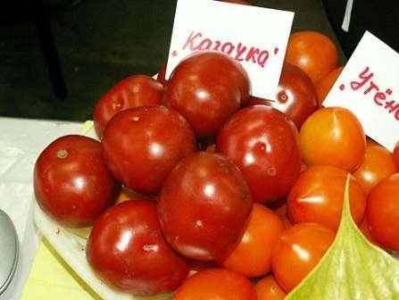 Томат высотой до 1,8 м с маленькими (до 50 г) темно-красными круглыми плодами.