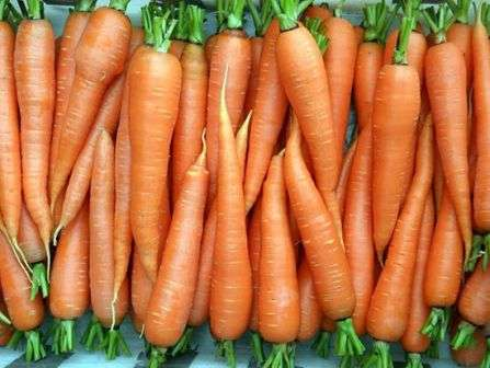 Чтобы вы точно не ошиблись, решая, какую купить морковь (семена), — лучшие сорта и отзывы размещены на этой странице.