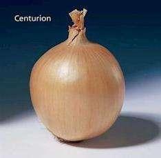 Избрав сорт Центурион, вы обеспечите свою семью хорошим запасом этого витаминного овоща, который помогает в борьбе с инфекциями, воспалениями и авитаминозами.