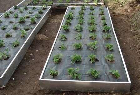 Теплую грядку можно изготовить не только в открытом грунте, но и в теплице. В ОГ над ней обычно устанавливают дуги и накрывают их агроволокном.