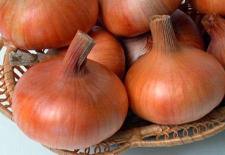 Если вы разыскиваете достойный ранний сорт лука, чтобы посадить его в грядущем сезоне, обратите внимание на лук Штутгартер Ризен. Описание сорта, отзывы и наглядные фото, предоставленные в этой статье, продемонстрируют вам его явные преимущества.