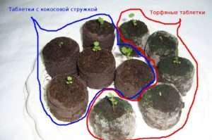 По наблюдениям земледельцев, торфяные таблетки иногда покрываются плесенью при излишке влаги.