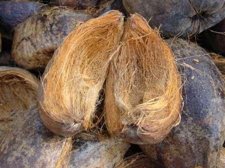 Перед тем как поступить в продажу как аграрный материал, измельченная кокосовая кожура проходит такие этапы обработки: