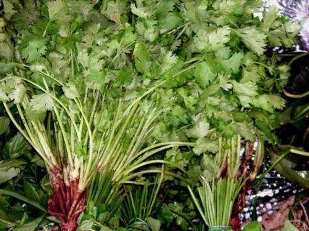 В кулинарии принято использовать семена этой пряной травы, но ее листья (кинза), схожие с листьями петрушки, также выделяются чудесным ароматом и применяются для салатов и мясных блюд.