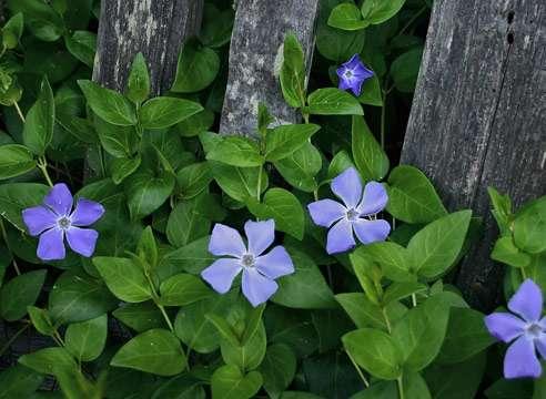 И наконец, на затененном участке на даче можно посадить тенелюбивые цветы.