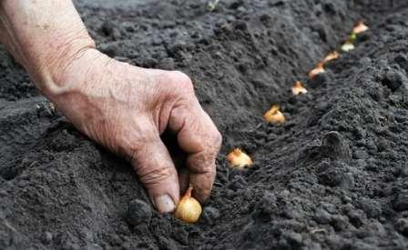 В конце подготовительного этапа его следует замочить в растворе медного купороса или марганцовки.