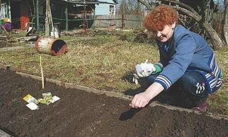 Для посадки кабачков делают не более трех лунок на квадратном метре.