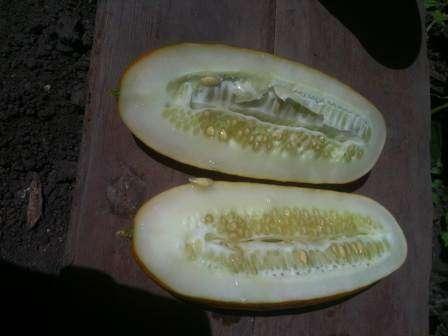 При этом соблюдайте одно условие — не трогайте семена, находящиеся в задней части плода.