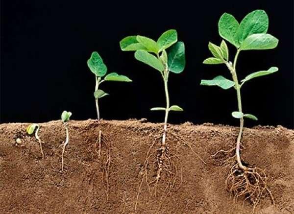 Такие препараты, как Эпин или Циркон действительно улучшают прорастание и развитие этих культур. Их влияние положительно сказывается на урожайности и лежкости плодов.