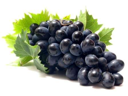 Болезни винограда фото и описание