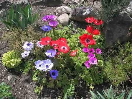 Какие цветы цветут с весны до осени фото и названия