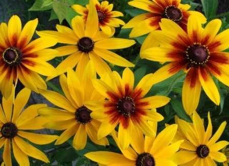 Эти цветочки знакомы многим.