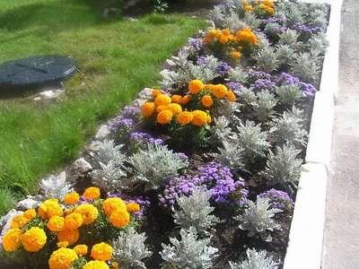Эффектно выглядит посадка, где соседние растения отличаются по форме, фактуре и цвету.