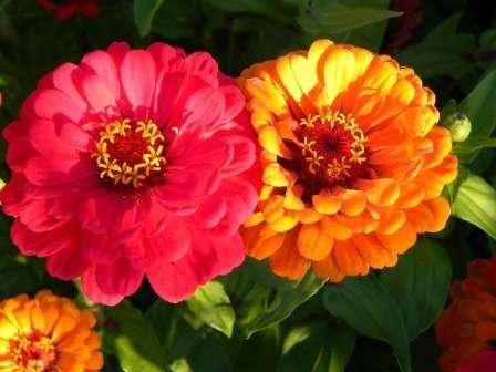 Комплексные подкормки помогут добиться по-настоящему шикарного цветения.