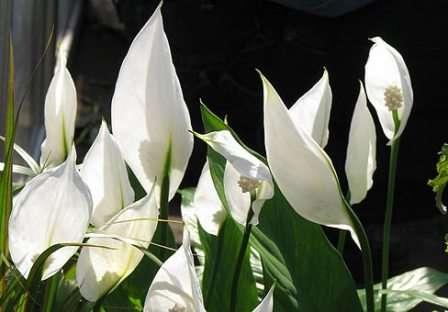 Сегодня на нашем фермерском сайте мы поговорим об этом красивейшем растении.