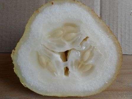 При низких температурах семена, скорее всего, отсыреют, а при температуре свыше 25 °С быстро утратят всхожесть.