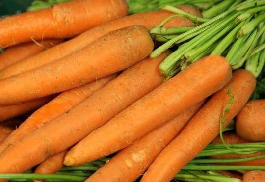 Болезни моркови при хранении