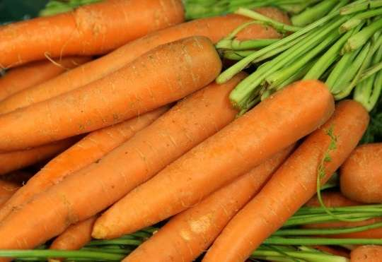 болезни моркови и борьба с ними