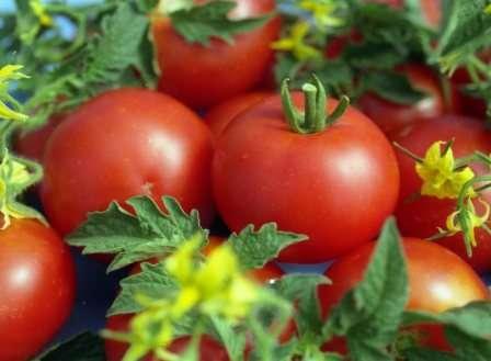 Наша тема — семена томатов: самые урожайные в 2018 году.