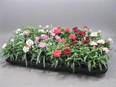 Емкости для посадки цветов могут быть самыми разными по форме и объему.