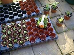 Теперь посаженные семена нужно накрыть воздухонепроницаемым прозрачным материалом, создав таким образом микротеплицу.