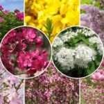 Цветущие кустарники-многолетники: фото с названиями