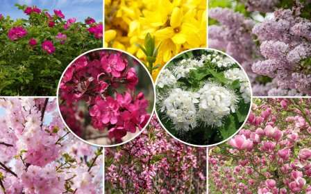 Сегодня, дорогие дачники и фермеры, мы рассмотрим самые популярные цветущие кустарники-многолетники — фото с названиями.