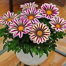 Зимой цветок не нуждается в каком-либо особенном уходе.