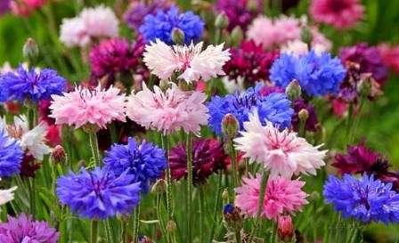оформление могил живыми цветами фото
