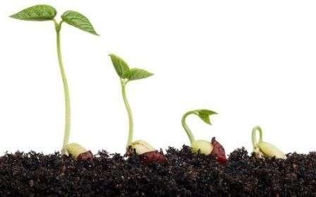 Дальше мы подробно рассмотрим рекомендованный состав почвы для различных видов огородных культур.
