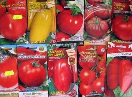Подготовить семена помидоров к посадке на рассаду 965