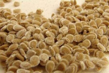 Купленные или собранные семечки необходимо высыпать на стол и тщательно перебрать.
