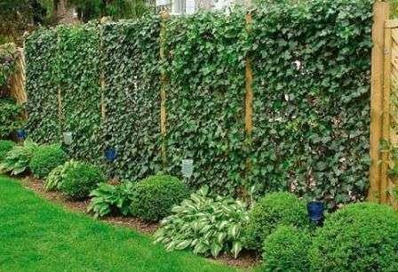 Вы можете озеленить ограды вьющимися растениями или создать зеленое ограждение из подходящих кустарников.