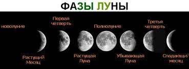 Если выкопать луковицы на убывающую Луну, они будут сочнее и смогут дольше храниться.
