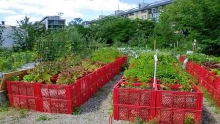 Сад и огород не как у всех интересные идеи на ютубе