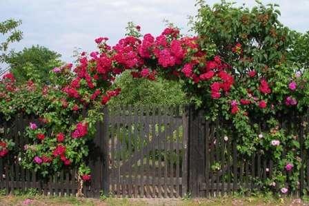 Какой бы стиль дизайна вы ни избрали, не забывайте про вьющиеся цветы для сада, из которых можно создать живые изгороди, цветущие арки и беседки, растительную отделку зданий.