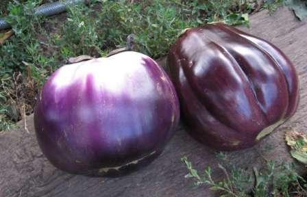 На фото вы видите плоды, которые весят в среднем 250 г и имеют плотную, но нежную по текстуре мякоть.