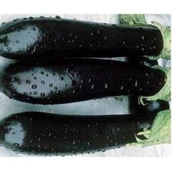 Длина плода достигает 20 см.