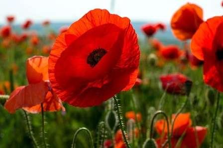 Весенней красотой радуют садоводов васильки, незабудки, маки, фиалки, бегонии.