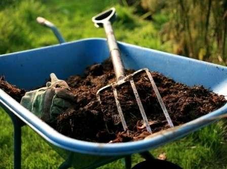 Перегнойи компост не только напитывают землю ценными минералами, но и улучшают ее структуру, способствуя лучшему проникновения воздуха и воды к корням растений.