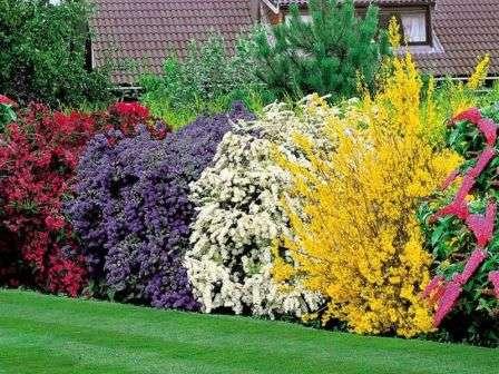 Садовые кустарники: виды, совместимость и уход