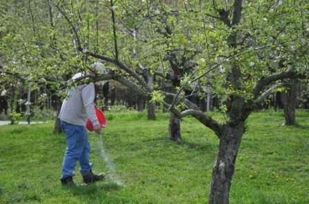 Уделив внимание своему саду осенью, вы получите обилие вкусных и полезных плодов будущим летом.