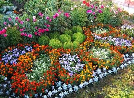 Отличной альтернативой длительно цветущим растениям станет набор декоративных культур с поочередным цветением.