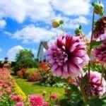 Как подобрать однолетние и многолетние садовые цветы, цветущие все лето?