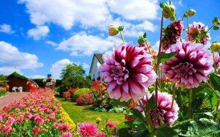 Прекрасное зрелище и приятные ароматы, которые вам подарят яркие однолетники и многолетние садовые цветы, цветущие все лето, сделают работу на дачном или фермерском участке легче, а отдых незабываемым.