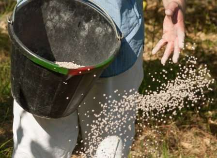 Сухие минеральные подкормки клубника впитывает корнями дольше, но и срок действия у них более продолжительный.