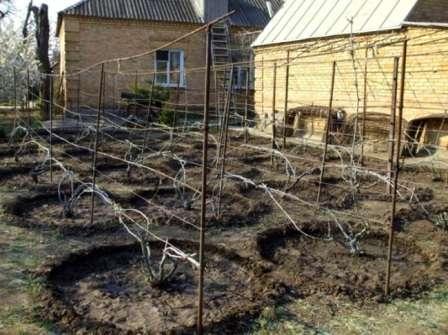 Не бойтесь повредить корни растений, так как они быстро возобновятся.