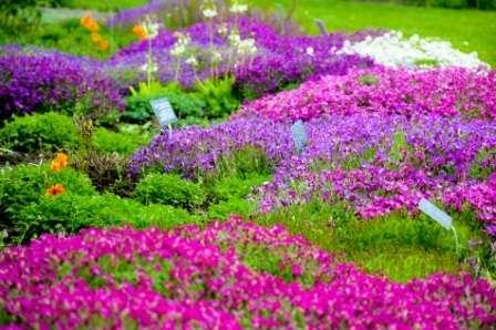Беря в расчет период цветения, можно создать чарующий цветник, который будет буять красками на протяжении всего лета.