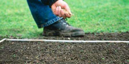 Мелкие семена травы нужно распределить по участку равномерно.