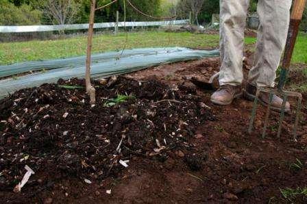 Калий деревьям и кустарникам осенью доставит сернокислый калий или хлористый калий.